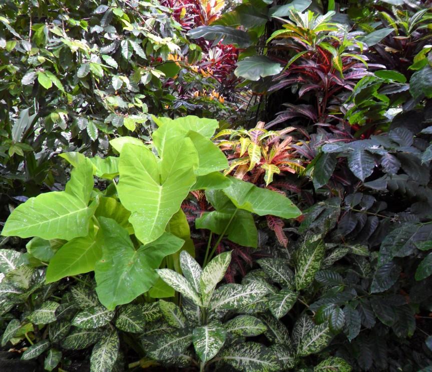 JungleInColors (2)