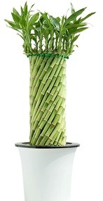 LuckyBamboo column for sale