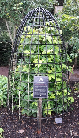 poison ivy in a cage